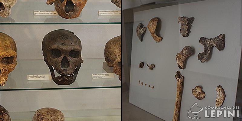 collage-preistoria