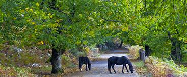 Nelle immagini: Cavalli allo stato brado.