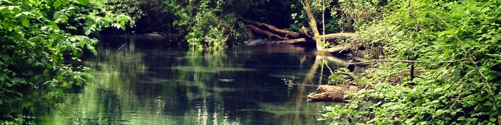 le-acque-e-gli-anfibi