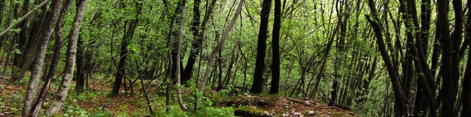 nella-boscaglia