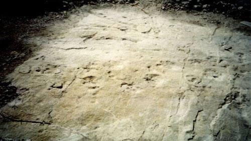 Le impronte di dinosauri