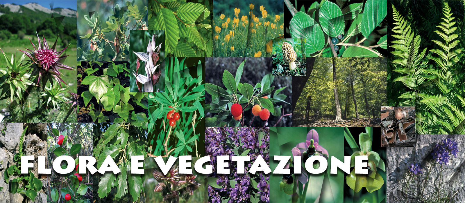 flora-e-vegetazione-nuova