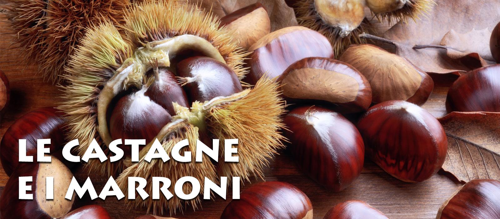 le-castagne-e-i-marroni-1600x700