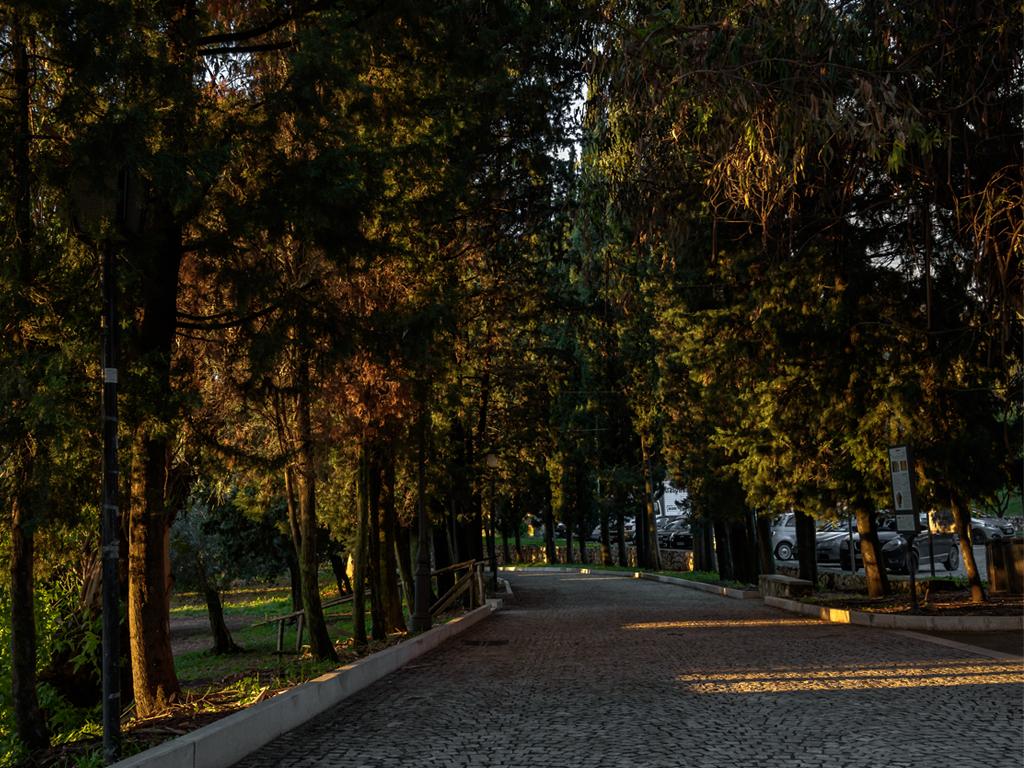 viale-abbazia-1024x768